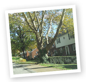 Penn Hills Homes
